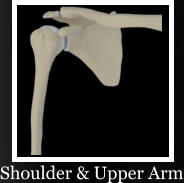 Shoulder & Upper Arm
